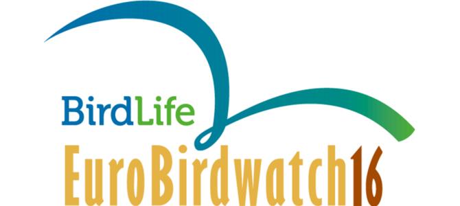 Sărbătoarea migrației: Euro BirdWatch 2016