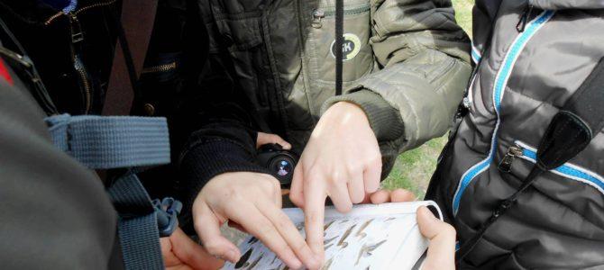 Ziua Internațională a Păsărilor sărbătorită pentru prima oară în Republica Moldova