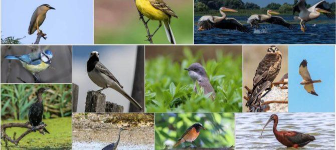Ziua Internațională a Păsărilor – studiem păsările împreună!