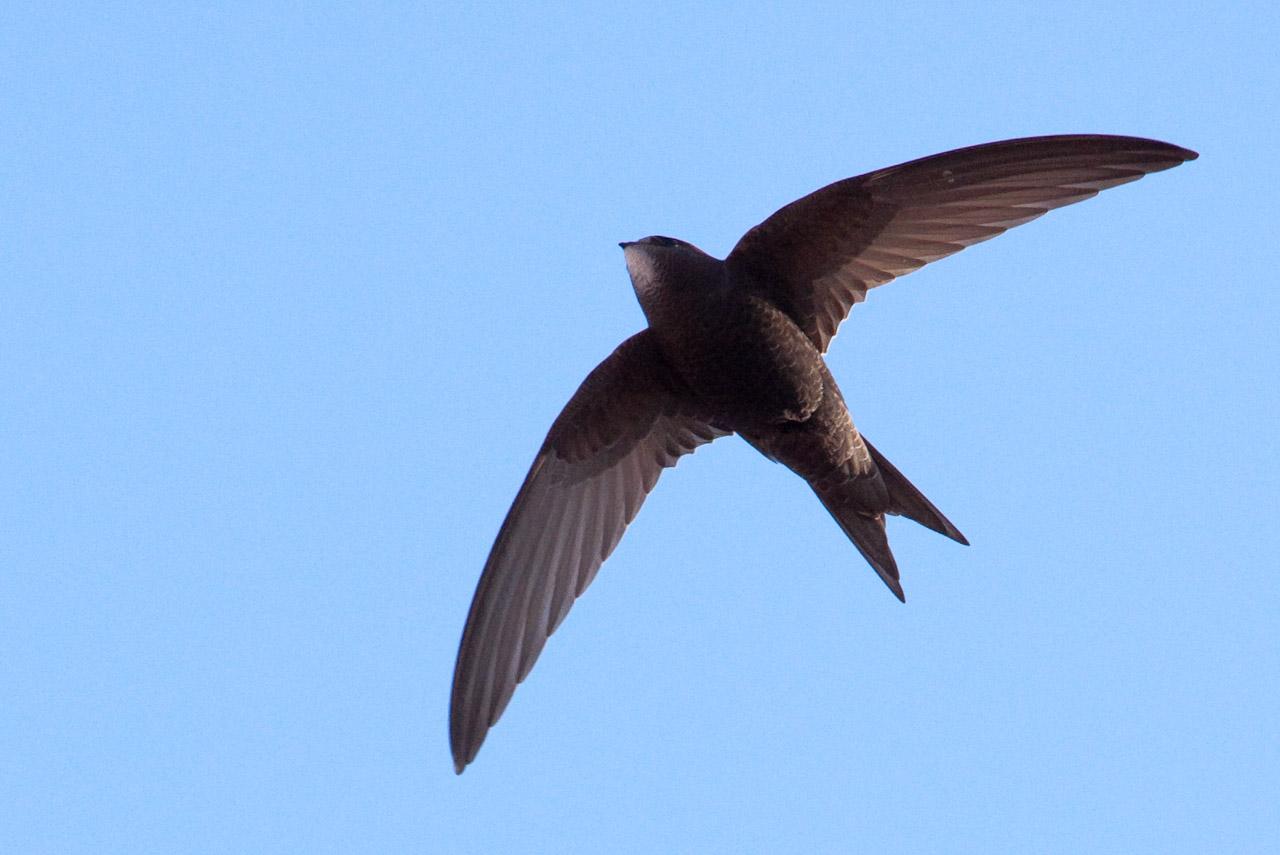 """""""Păsările – culorile naturii"""": Să vorbim despre drepnele"""