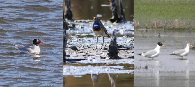 Ziua Mondială a Păsărilor Migratoare