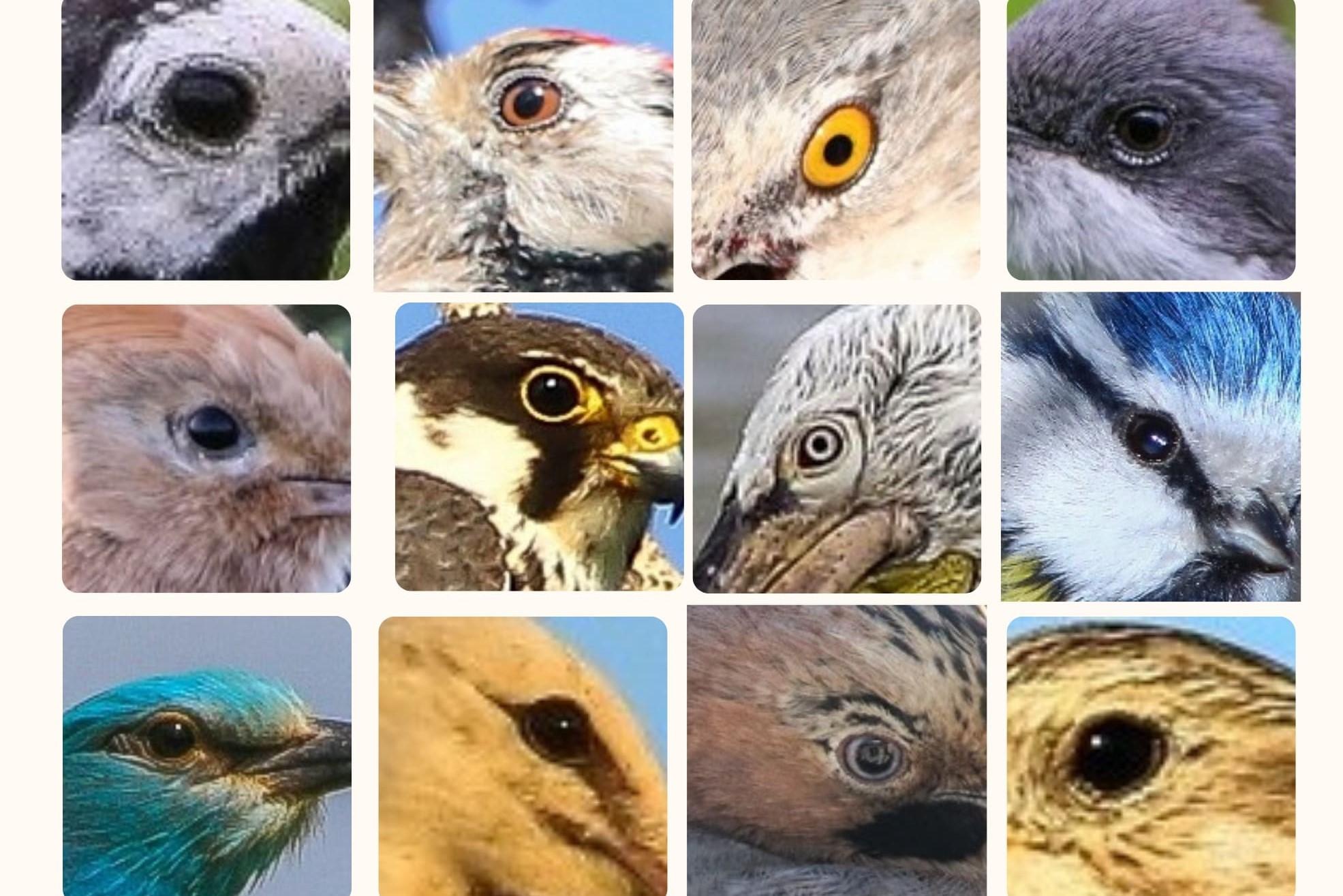 """""""Păsările – culorile naturii"""": Cum văd păsările lumea"""