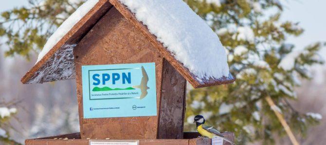 Hrănirea păsărilor sălbatice pe timp de iarnă