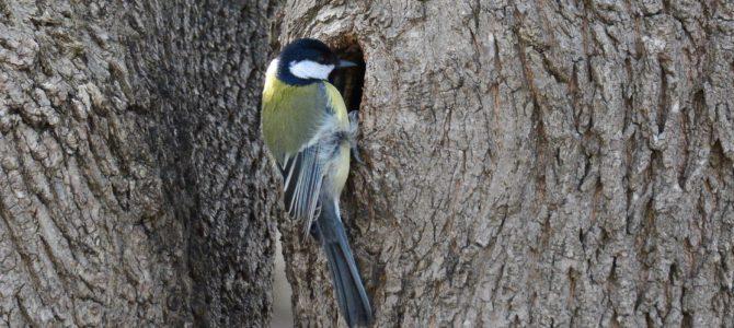 SPPN caută voluntari care știu păsări