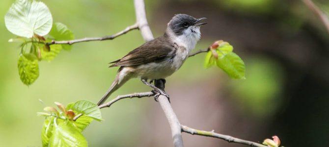 Cântecul păsărilor: antidotul pe care îl mai avem încă la dispoziție