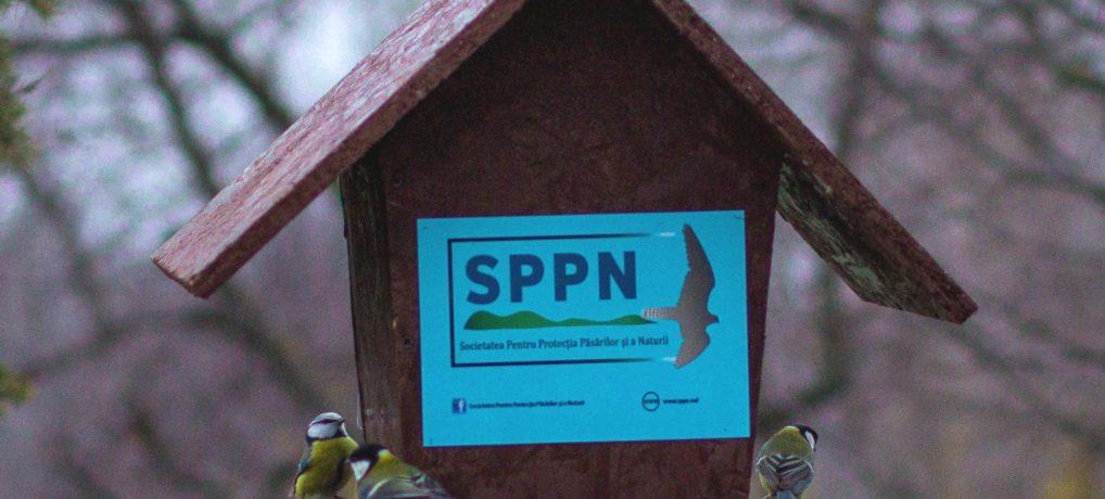 Concursul iernii: fotografiază păsări la hrănitoare și câștigă premii inedite!
