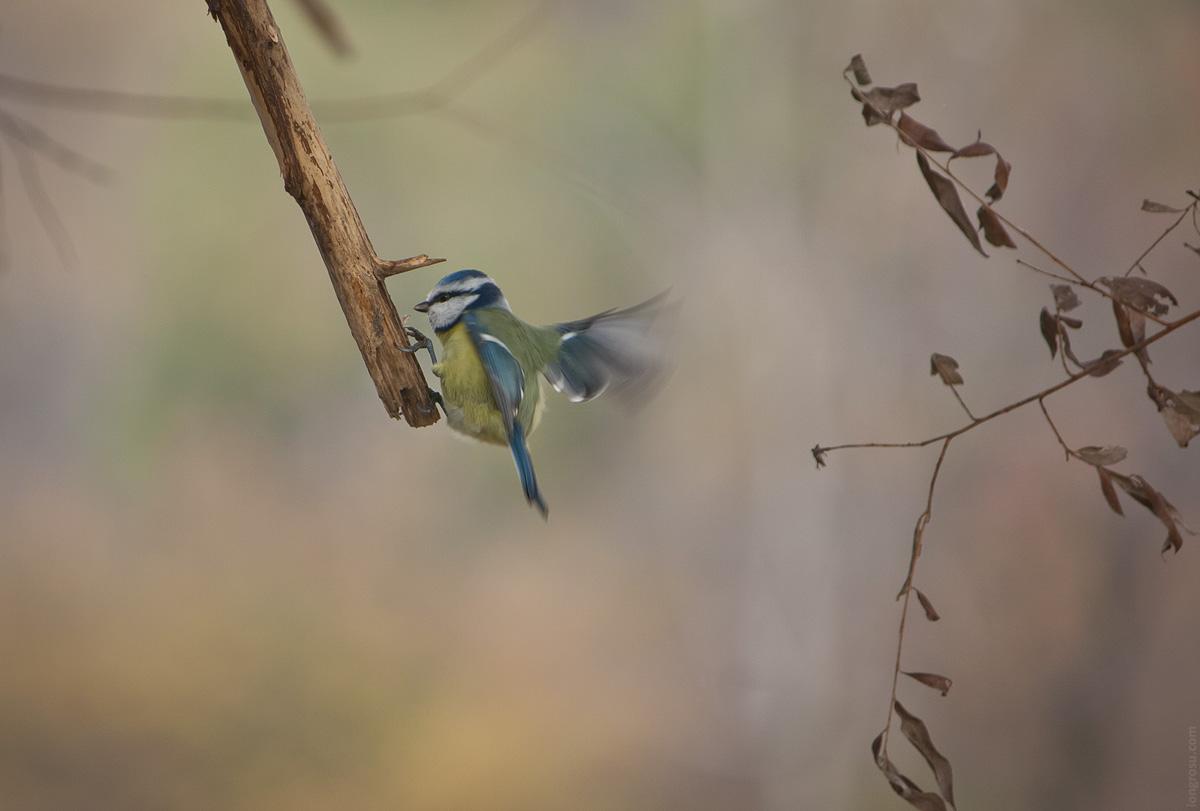 Ce este biodiversitatea?