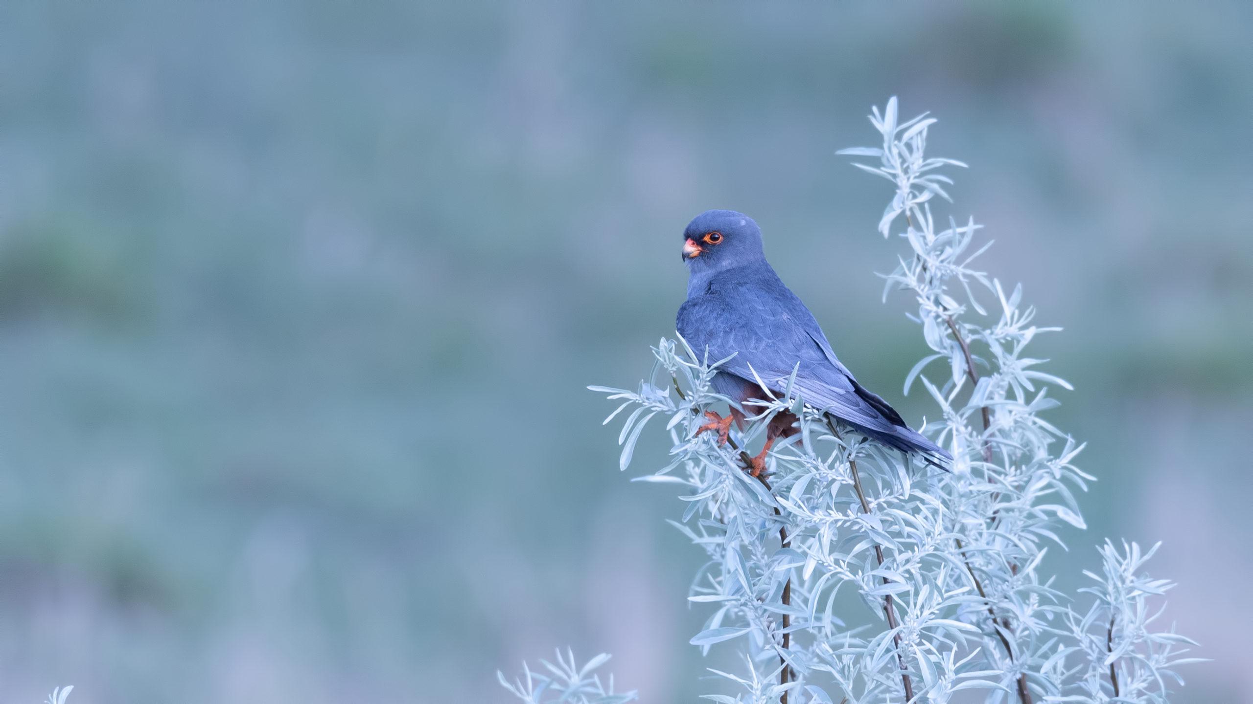 Opt întrebări (și răspunsuri) despre păsările sălbatice