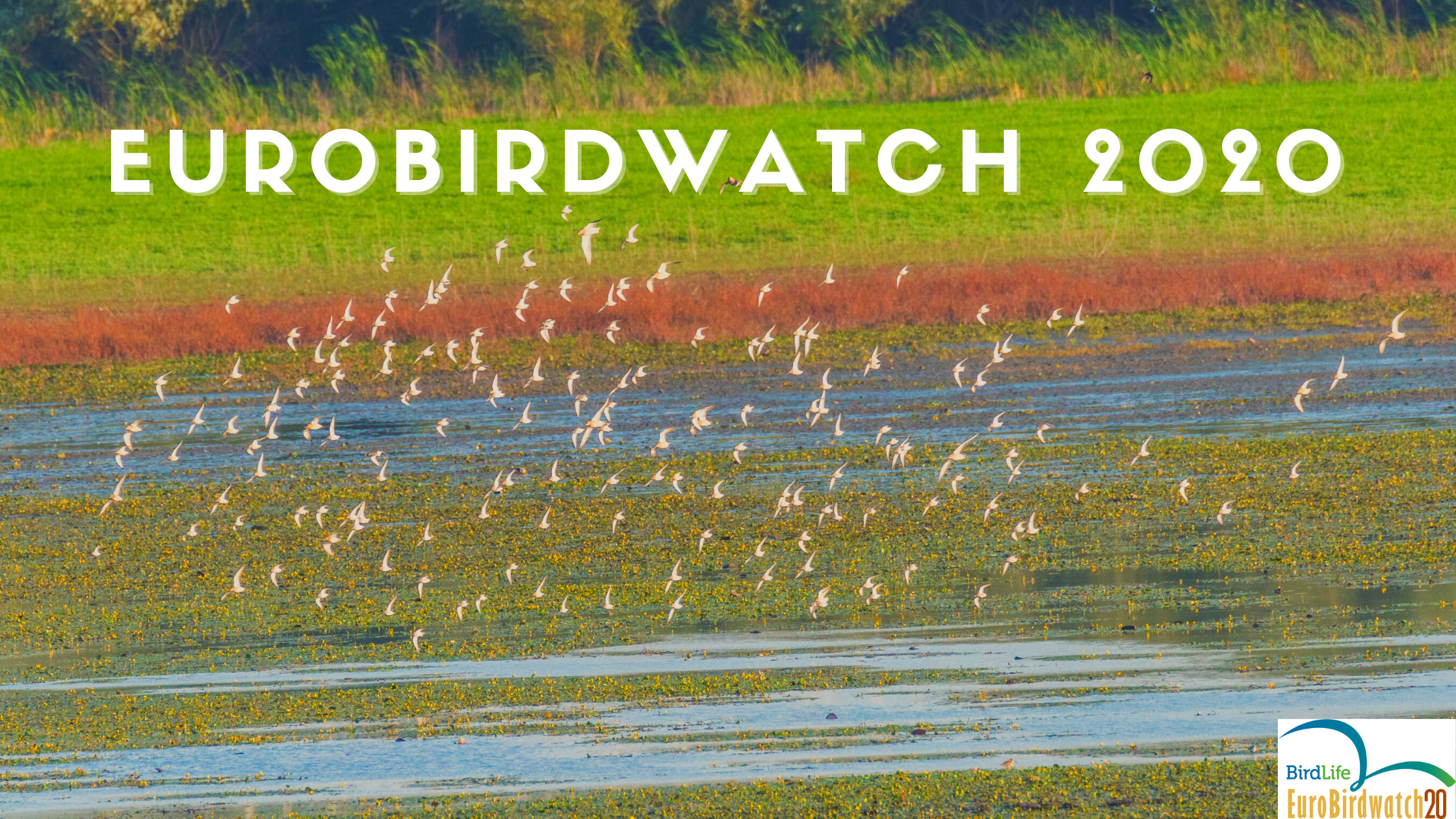 Eurobirdwatch 2020 în Moldova