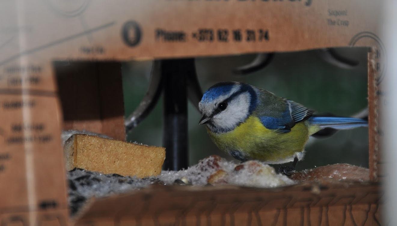 Hrănește păsările sălbatice și câștigă premii!