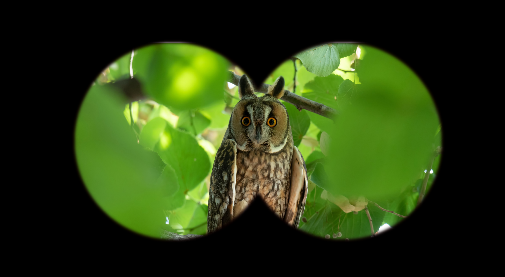 Observarea păsărilor: sfaturi la început de drum