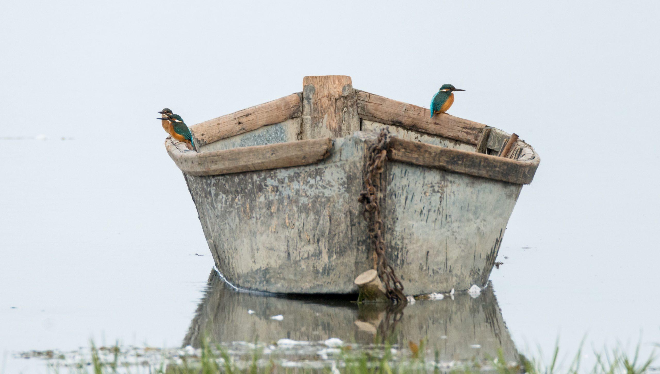 Noua Listă Roșie Europeană: ce se întâmplă cu păsările noastre?
